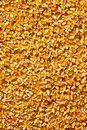 Corn Seed Royalty Free Stock Image