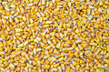 Corn seed agriculture background texture Royalty Free Stock Photos