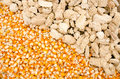 Corn seed with cob dried and are placed together Royalty Free Stock Images