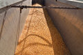 Corn seeds crop unloaded in the truck by combine after harvesting Royalty Free Stock Photos