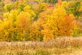 Corn stalks and fall colors Royalty Free Stock Photo
