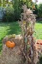 Corn stalks and pumpkins on hay bales Royalty Free Stock Photo