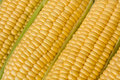 Corn or sweetcorn on the cob closeup Royalty Free Stock Photo