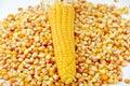 Corn and tinned corn mais food Stock Image