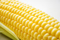 The corn on white Royalty Free Stock Photography