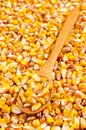 Corn in wooden spoon Stock Images