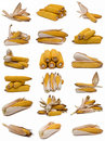 Corncobs collection. Stock Photography