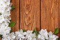 Corner floral frame from flowers apple tree on a wooden Royalty Free Stock Photo
