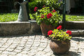 Corner of home garden beautiful details closeup Royalty Free Stock Photo