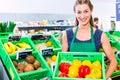 Corner shop clerk filling up storage racks female organic grocery assistant coconuts in vegetable department Stock Image