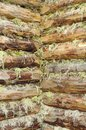 Corner of Wood Log House Chinked with Moss Stock Photography