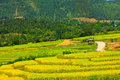 Cornfield green rice fields in thailand Stock Photos