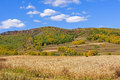 cornfield and mountain forest in the autumn Royalty Free Stock Photo
