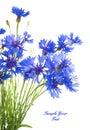 Cornflower. Bouquet of wild blue flowers. Royalty Free Stock Photo
