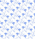 Cornflower pattern vector illustration eps Royalty Free Stock Photos