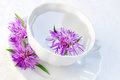 Cornflower in water in a cup Stock Photo