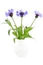 Cornflowers in the ceramic vase Stock Images
