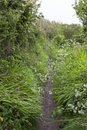 Cornish coastal path full of wild flowers, Cornwall, England Royalty Free Stock Photo