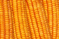 Corns close up of fresh Stock Photo