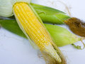 Corns sweet are used as food for human Royalty Free Stock Images