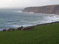 Cornwall Coastline near Trewavas Royalty Free Stock Photo