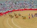 During corrida bullfighting cavaleiros coming through the stadium in barcelona Stock Photos