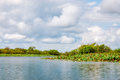Corroboree Billabong in Northern Territory, Australia Royalty Free Stock Photo