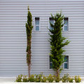 Corrugated building and trees Royalty Free Stock Image