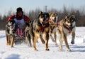 Corsa di cane di slitta nordamericana limitata Immagini Stock Libere da Diritti