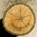 Corte el grano de madera del registro Foto de archivo