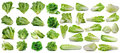 Cos fresh chinese cabbage and lettuce on white background Royalty Free Stock Photo