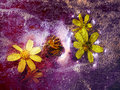 Cosmic Flowers Royalty Free Stock Photo