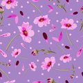 Cosmos Flowers and Dots-Flowers in Bloom, seamless repeat pattern