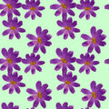 Cosmos. Seamless pattern texture of flowers. Floral background,