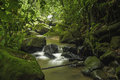 Costa rica rainforest small mountain stream in a in Stock Image