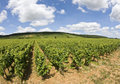 Cote de nuits. Burgundy. France Stock Photo