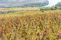 Cote Rotie, Rhone-Alpes, France Royalty Free Stock Photo