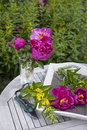 Cottage garden with common peony Stock Images