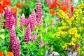 cottage garden flowers background Royalty Free Stock Photo