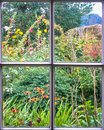 Cottage garden through an old sash window in full bloom Royalty Free Stock Image