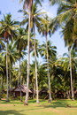 Cottages in palm forest Stock Photography
