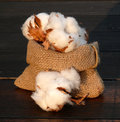 Cotton balls into a small basket Royalty Free Stock Photography