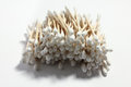 Cotton Buds Stock Photos