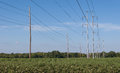 Cotton field and power lines Royalty Free Stock Photo