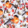 Cotton plant branches, red berries, winter finch birds. Repeating pattern. Watercolor Royalty Free Stock Photo