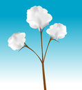 Cotton plant cartoon illustration of a Royalty Free Stock Photography