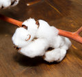 Cotton plant on wooden background Royalty Free Stock Photography
