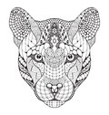 Cougar, mountain lion, puma, panther head zentangle stylized, ve Royalty Free Stock Photo