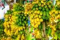 Countless Yellow Bananas, Bunc...