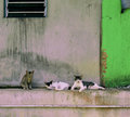 Country cats lazing around the village house relaxing life of hiding in shade to keeping cool from scorching sun Stock Photography